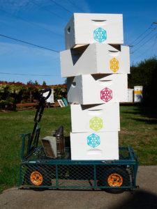 Hive Boxes