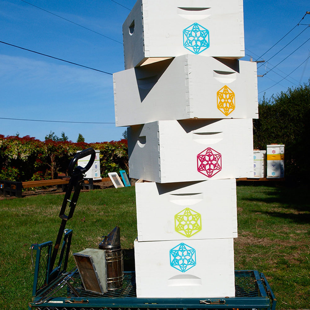 Hive Stack at Sanctuary Farms