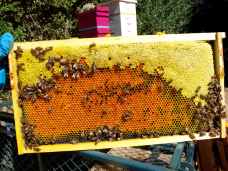 Hive Tours