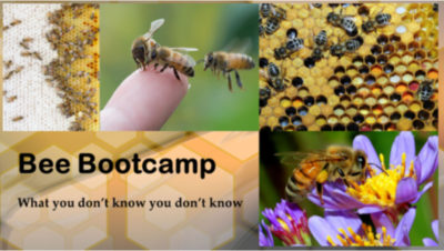 Bee Bootcamp
