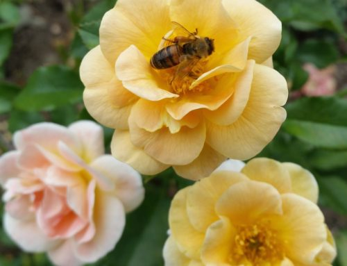 Gardening and Pollinators – How to Take Your Game Up a Notch