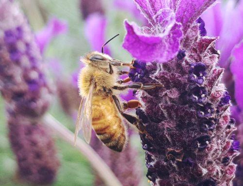 Plants, Nectar, and Pollinators